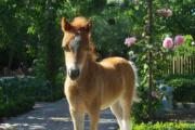 Paardenmarkt (Torhout)