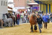 Jaarmarkt en Volksfestival (Anderlecht)