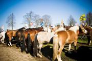 Paardenjaarmarkt (Kuringen)