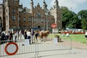 Paardenmarkt (Dilbeek)