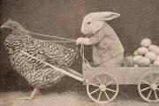 Waarom is de paashaas in het Engels een konijn?